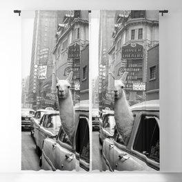 Llama Riding in Taxi, Black and White Vintage Print Blackout Curtain