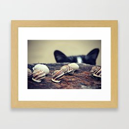 Cat Snails Framed Art Print