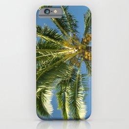 Hawaiian Coconut Palm Tree iPhone Case