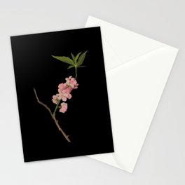 Amygdalus Persica  Mary Delany Delicate Paper Flower Collage Black Background Floral Botanical Stationery Cards