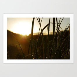 Grass in the Morning Art Print