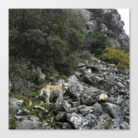 climbing Canvas Prints featuring Climbing by aeolia