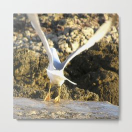 seagull flying Metal Print