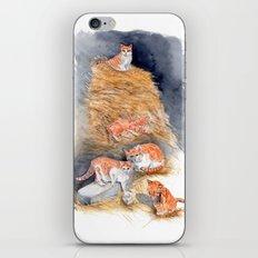 Orange Kittens in Hay iPhone Skin