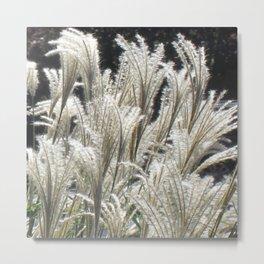 Silver Grass Plumes Metal Print