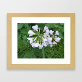 little purple flowers Framed Art Print