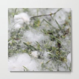 Cotton or snow Metal Print