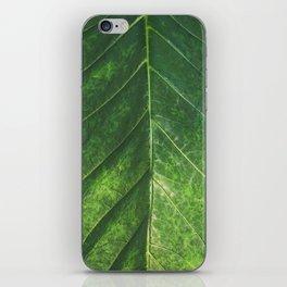 Botanical Gardens Leaf #101 iPhone Skin