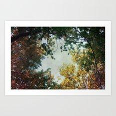 forest 015 Art Print