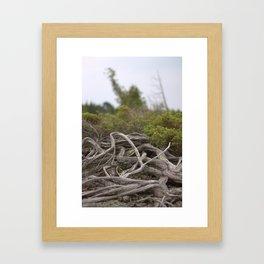 Root Over Rock Framed Art Print