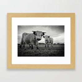 Two Shaggy Cows Framed Art Print