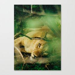 Lion Cub 2 Canvas Print