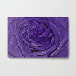 Purple Roses Flowers Plant Romance Metal Print