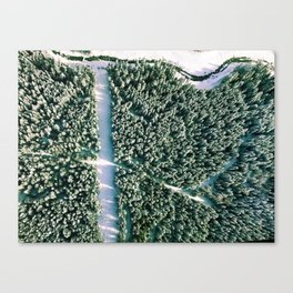 Trees below Canvas Print