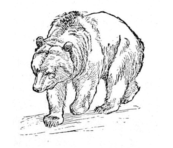 Bear Metal Travel Mug
