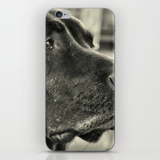 Really? iPhone Skin