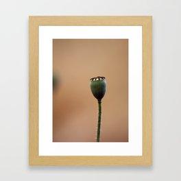 Sleeping Poppy  Framed Art Print