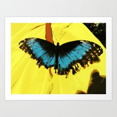 Butterfly Test Art Print