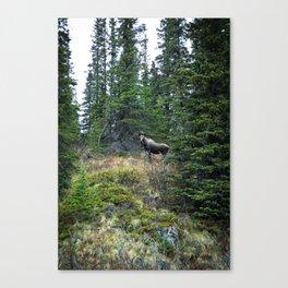 Mr. Moose Way Up North Canvas Print