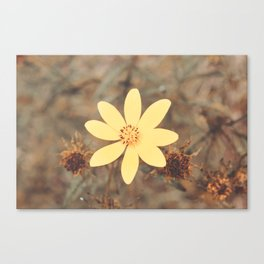 Bidens Aristosa Summer Wildflower Photography Canvas Print