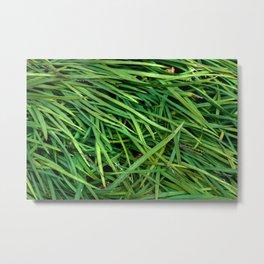 Organic Plant Blades Metal Print