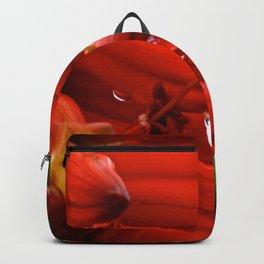 Crying Aloe Backpack