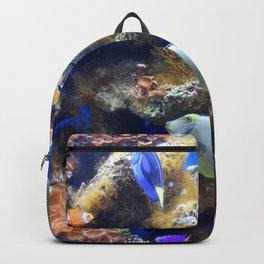 Photo 49 Aquarium Backpack
