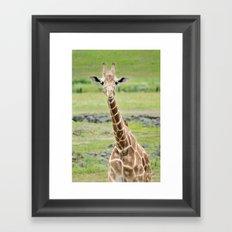 Smiling Giraffe Framed Art Print