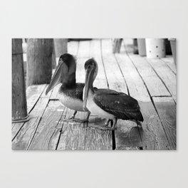 Juvenile Brown Pelican Tale 4 Canvas Print
