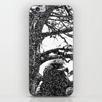hawk iPhone & iPod Skins featuring Hawk by Anand Brai
