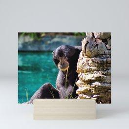 Sweet Howler Monkey Mini Art Print