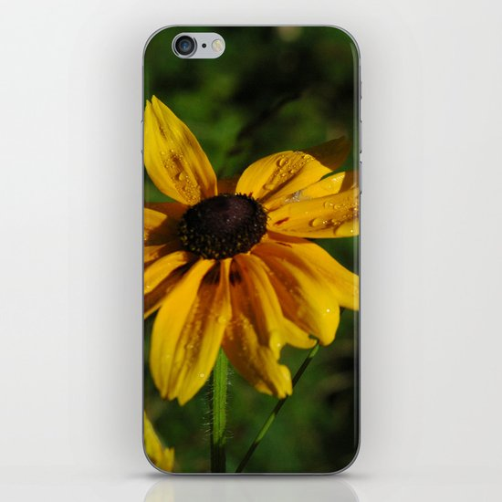 Black Eyed Susans iPhone & iPod Skin