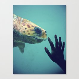 Turtle meeting human Canvas Print