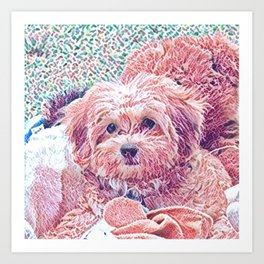 Copper the havapookie as a puppy Art Print