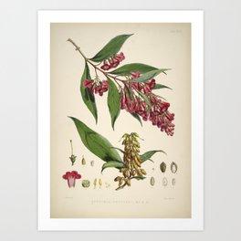 Flower buddleia colvilei Art Print