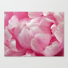 Glorious pink peony with dew drops floral photography Canvas Print