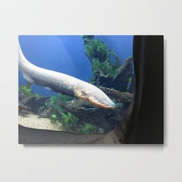 Electric Eel 2 Metal Print