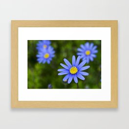 Blue Flower, Yellow Heart Framed Art Print