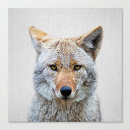 Coyote - Colorful Canvas Print