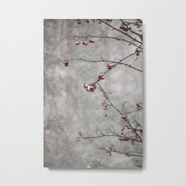 Rowan tree and snow Metal Print