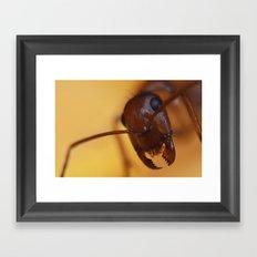 Giant Ant Framed Art Print