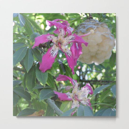 Silk Floss Tree Blossom & Fluff Metal Print