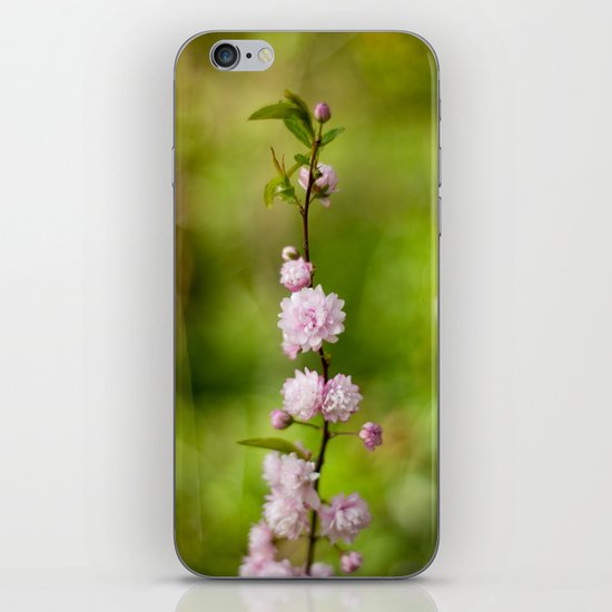 Flowering Almond Blossoms iPhone & iPod Skin