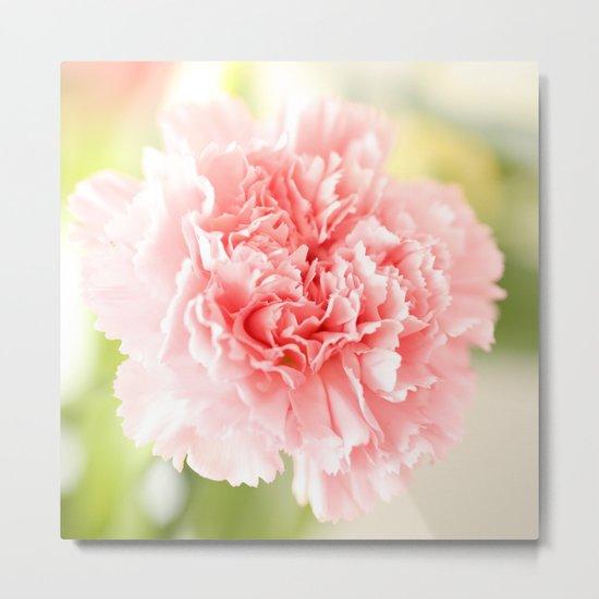 Pink Carnation Admiration  Metal Print