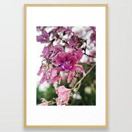 Kapok Tree Flower Framed Art Print