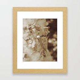 Birch Bark Beauty Framed Art Print