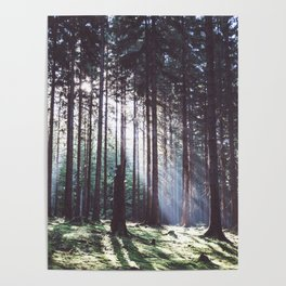Magic forest - Landscape and Nature Photography Poster