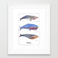 whales Framed Art Prints featuring Whales by Lene Daugaard
