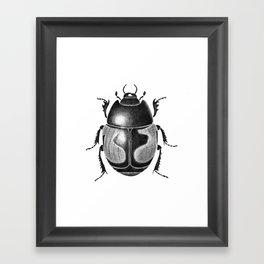 Beetle 10 Framed Art Print