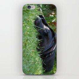 buller iPhone Skin
